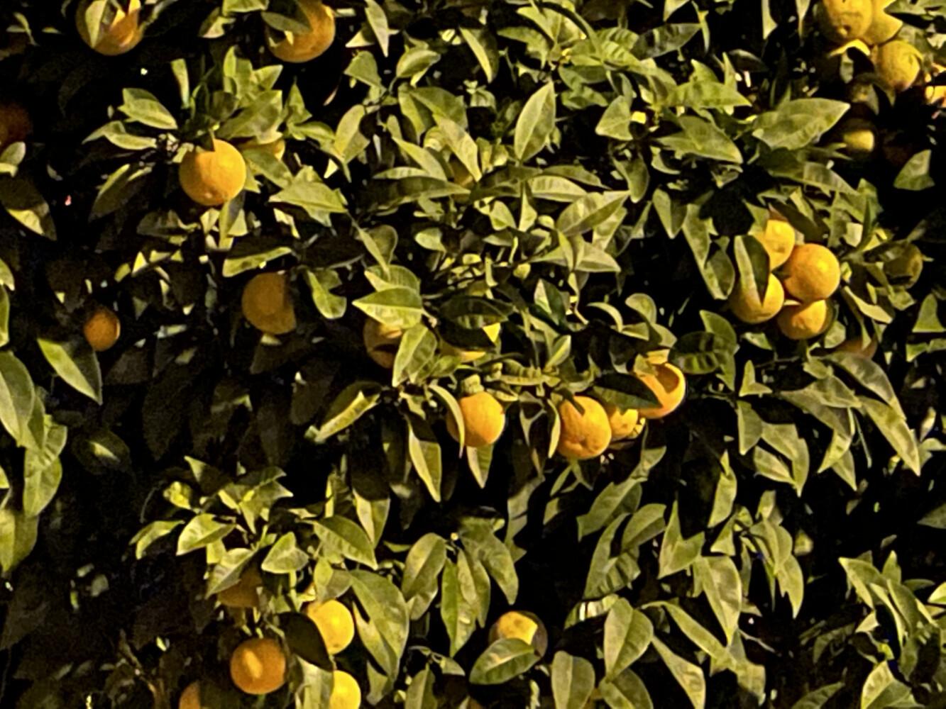 Foto de Imágenes tomadas con el iPhone 12 mini (83/88)