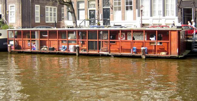 El barco de los gatos, en Amsterdam