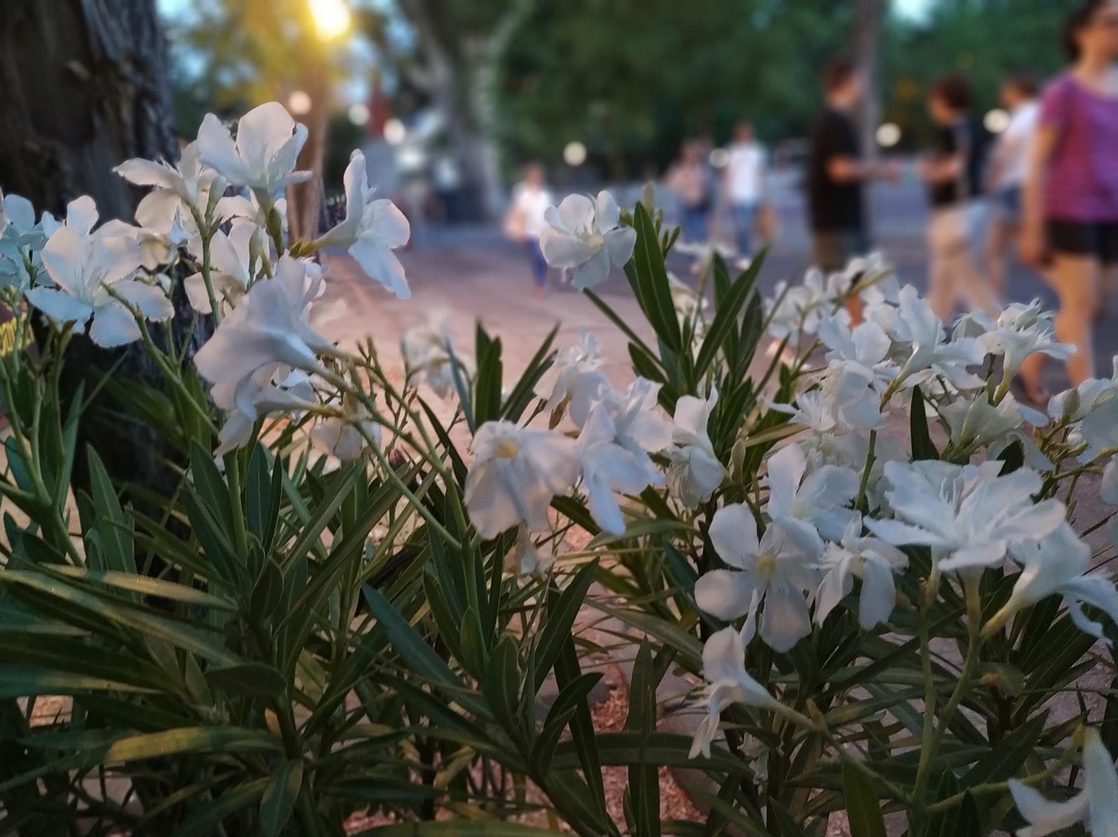 Foto de Xiaomi Mi A2, fotografías (28/28)