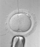 Nace el primer bebé del Reino Unido concebido por vitrificación