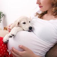 Convivir con perros y gatos en el embarazo tiene beneficios para la salud del bebé, según un estudio