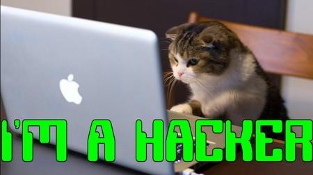 El ataque DDoS contra Dyn DNS que sacudió Internet fue probablemente obra de hackers amateurs