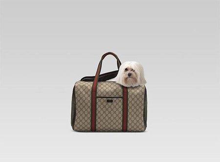 Bolsos Gucci para perro 6ecedd4e21c