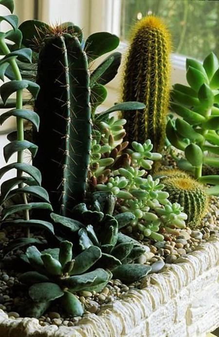 Cactus Jardinera