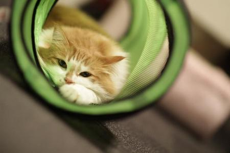 1024px Tunnel Cat (6414878527)