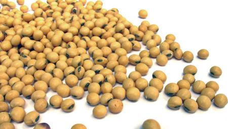 La soja: un alimento cardiosaludable