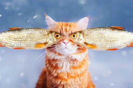 Ginger Cat Photography Kotleta Cutlet Kristina Makeeva Hobopeeba 4