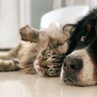 AdoptaMe: adoptar animales ahora es más fácil gracias a esta app española
