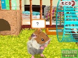 Love Love Hamster