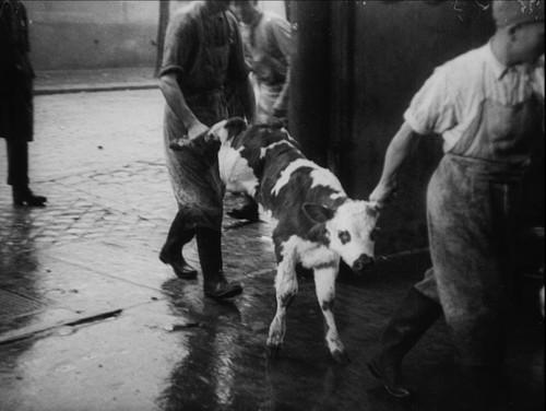 'La sangre de las bestias', el espantoso (e involuntario) primer manifiesto audiovisual vegano