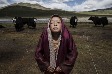 A Young Tibetan Buddhist Novice Monk Stands With His Yak Herd At The Family S Nomadic Summer Grazing Area On The Tibetan Plateau In Yushu County Qinghai Chinakevin Frayersony World Photography Awards 2016