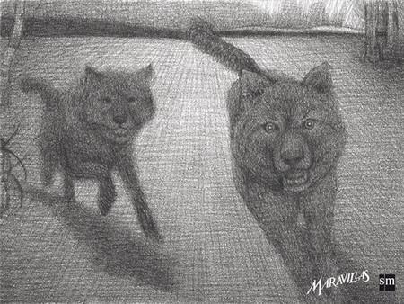 Maravillas lobos