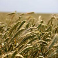 ¿Cómo era la agricultura en la Antigua Roma?