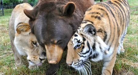 ¿Pueden los animales forjar relaciones de amistad con animales de otras especies?