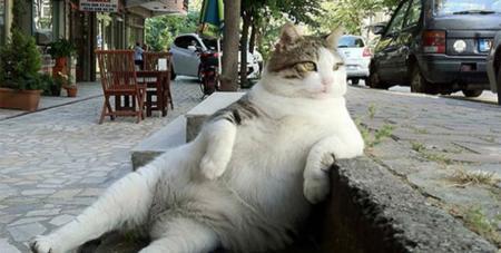 Hilarantes imágenes de gatos extrañamente sentados