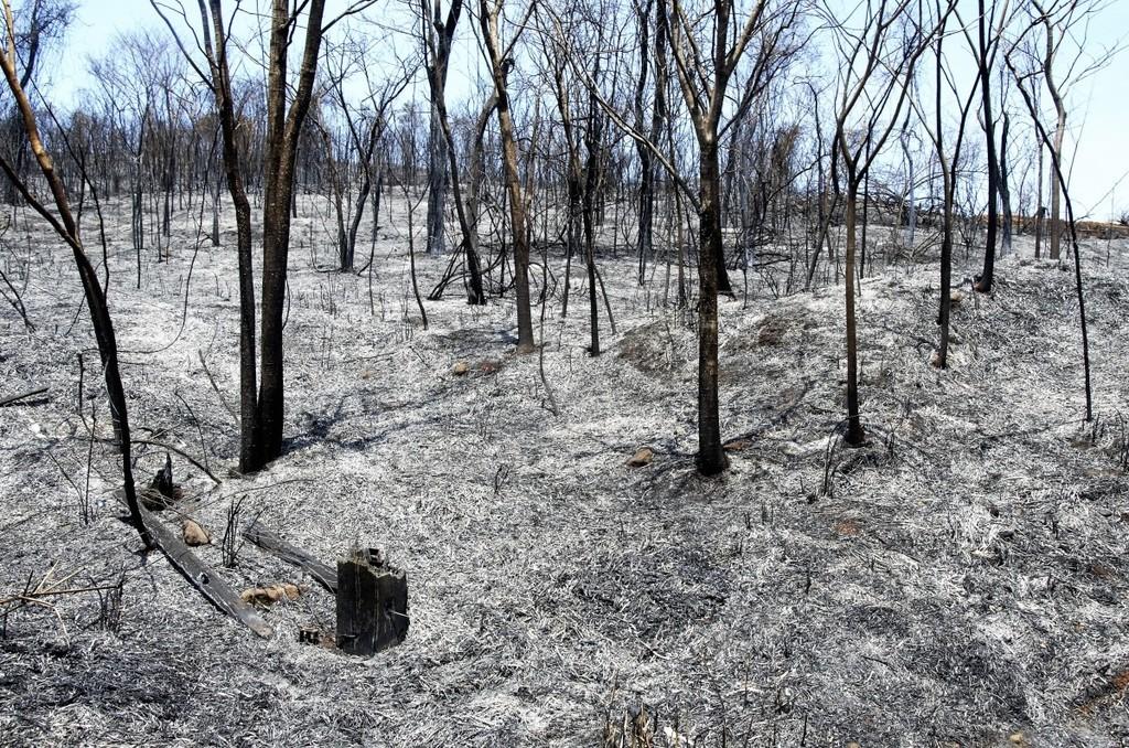 La primera operadora de enjambres de drones de EE.UU se dedica a la reforestación de bosques destruidos por el fuego