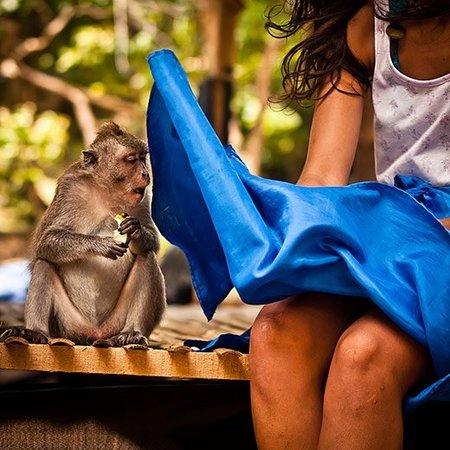 El Mono que Vio Demasiado
