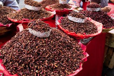 ¿Serán los insectos la comida del futuro?
