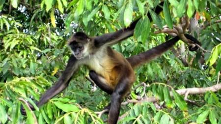 Mono Arana