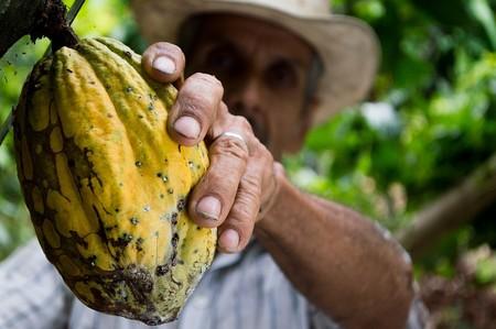 Estudio mexicano halla que molécula del cacao genera autodestrucción de células cancerosas