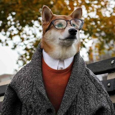 En El Nuevo Ano Chino Dedicado Al Perro Recordamos Los Mejores Looks De Nuestro Favorito Mensweardog 12