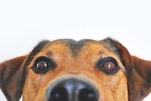 Los perros tienen unas nociones con los números que se parecen a la de los humanos