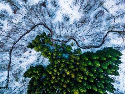 Los drones logran hacer fotografías tan espectaculares como éstas