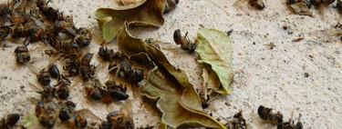 La masacre de insectos voladores no es sólo un problema de Alemania: todo el planeta depende de ellos