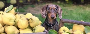 Que Cantidad De Frutas Verduras Y Alimentos Pueden Comer Los Perros