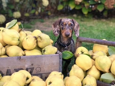 Alimentos que nunca debes dar de comer a tu perro