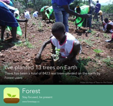 Real Tree Share