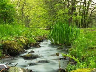 ¿Qué es el agua cruda? Esta moda puede poner en riesgo tu salud