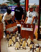 El viaje de los pingüinos