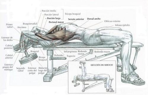Pullover: ¿un ejercicio recomendado?