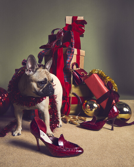 Tod S 2020 A Pawfect Holiday 6