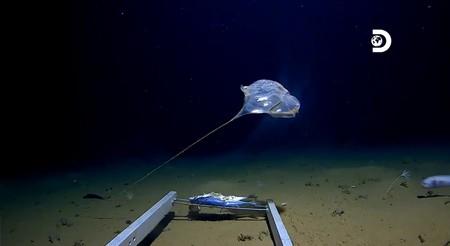 Una expedición récord a la fosa de las Marianas descubre vida en el fondo del océano. Y también plástico