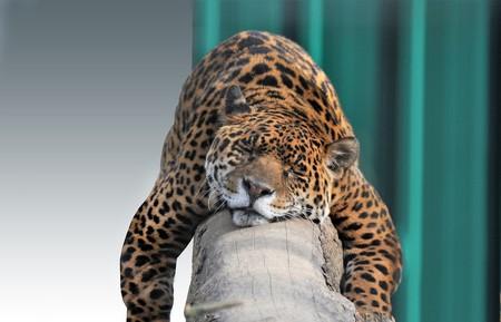 Jaguar 3952827 1920