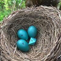 """Colocando """"huevos"""" de ocho caras en los nidos: así se pone a prueba lo que los pájaros aceptan en su refugio"""