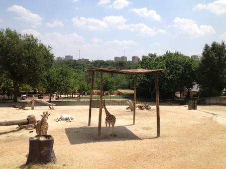 En el Zoo de Madrid ya se puede disfrutar del mirador de la pradera africana