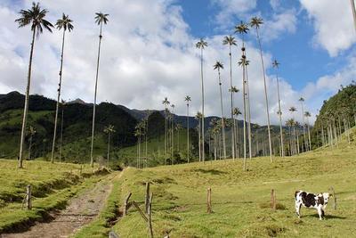 El Valle de Cocora en el Eje Cafetero de Colombia.