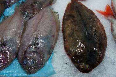 Conociendo pescados II: El lenguado y el gallo