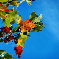 No pongas esa cara de otoño: te propongo los tips más audaces para prolongar lo mejor del verano en tu piel y espíritu