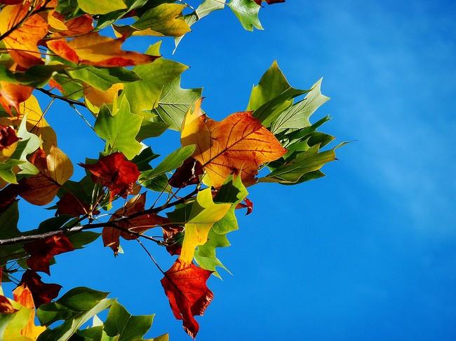 Autumn 974882 1280