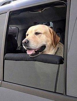 Almohadilla para un viaje de perros