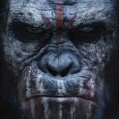 Foto 2 de 9 de la galería el-amanecer-del-planeta-de-los-simios-carteles en Espinof