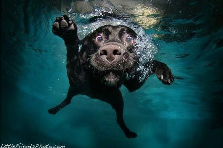 Sorprendentes fotografías caninas bajo el agua
