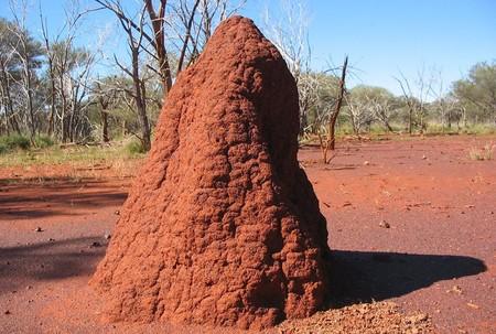 """Así son los """"rascacielos"""" creados por termitas: verdaderas obras arquitectónicas que son vitales para estos insectos"""