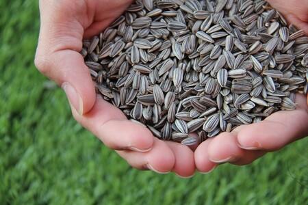 Beneficios de consumir semillas de girasol frecuentemente