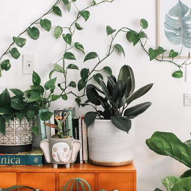 Cómo hacer tus propias macetas decoradas en casa para conseguir que tus plantas tengan un extra de estilo