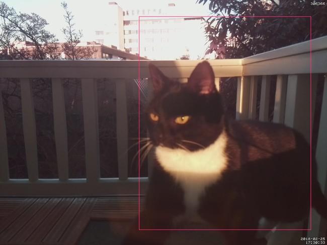 Reconocimiento De Gatos Por Software